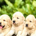New To Dog Breeding 5 Innovative Tips To Raise Vendible Offspring