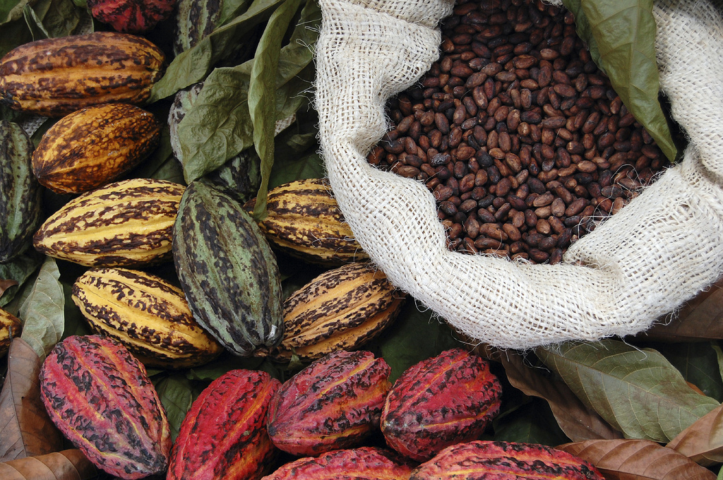 Artisan Chocolate Craftsmanship – The Layman's view of Chocolate from Tree to Bar