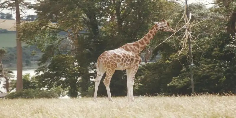 Fota Wildlife Park - Irish Rugby Tours, Rugby Tours To Cork