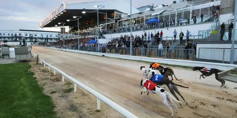 Greyhound Racing -Irish Rugby Tours, Rugby Tours To Limerick