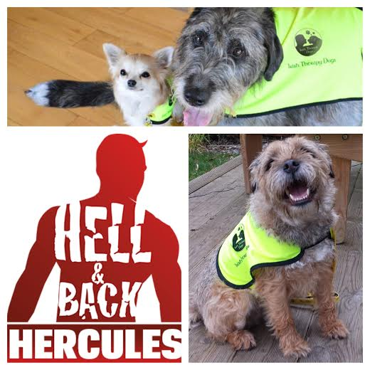 Hell And Back Hercules Irish Therapy Dogs