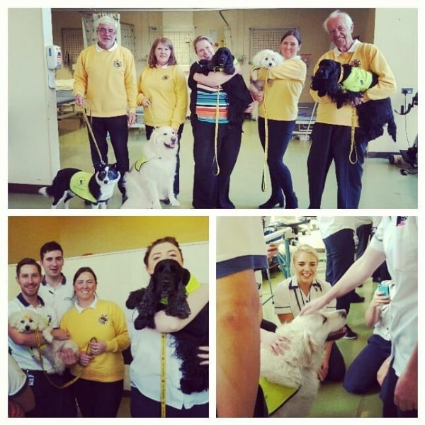 Irish Therapy Dogs give special moments to Staff at Beaumont Hospital.