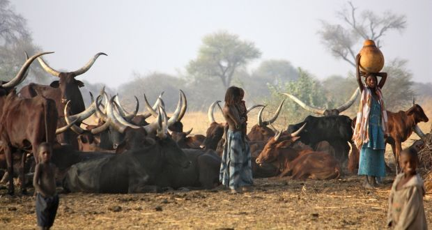 The Mbororo people roam vast areas across Niger, Nigeria, Chad, Cameroon and the Central African Republic