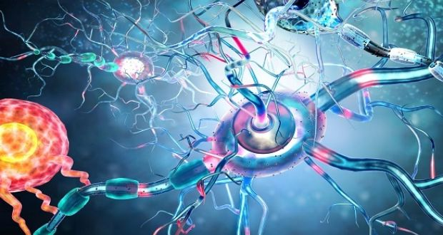 Image result for Potential treatment for Huntington's disease discovered by NUIG researchers