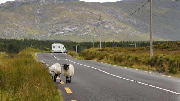Mobile home and sheep at a road in Ireland