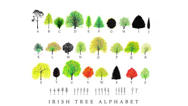 Why I made a new Irish Tree Alphabet
