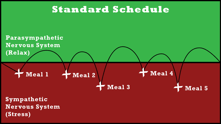 standard meal schedule stress and relax