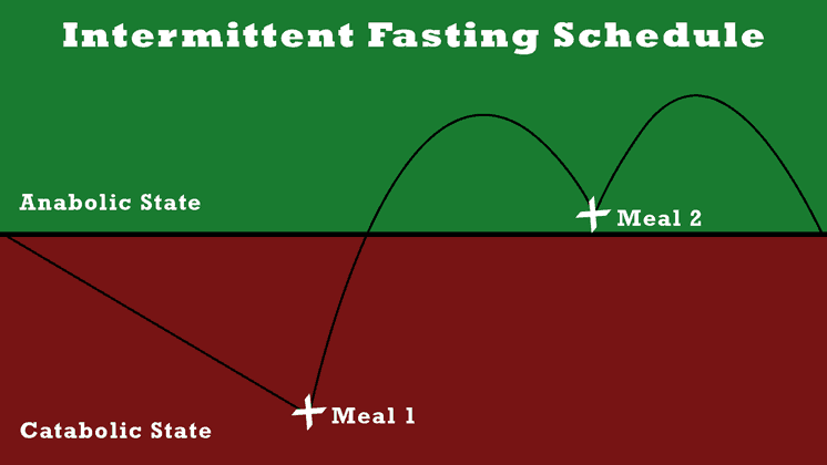 intermittent-fasting-schedule-anabolic-catabolic