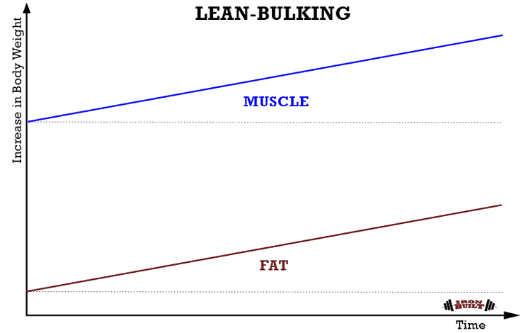 LEAN-BULKING-graph-Recovered