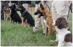 best-dog-breeds-for-bedbug-detection