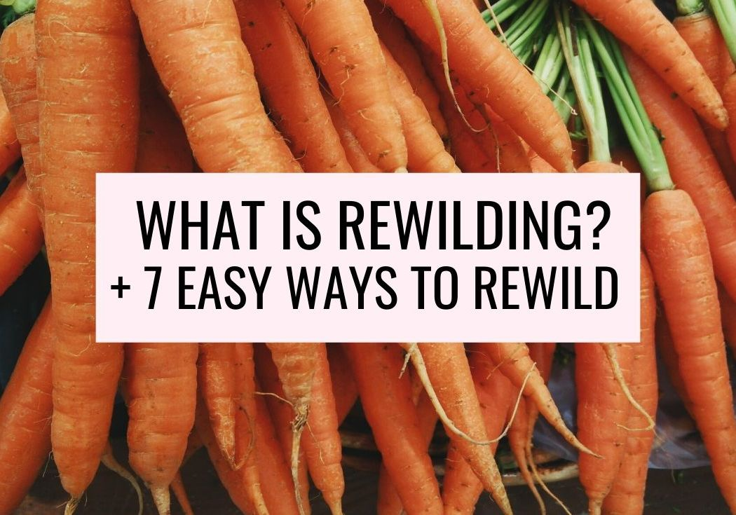 ways to rewild yourself what is rewilding