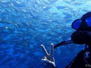 plongée cerbère réserve marine