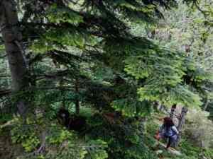 Découverte Bain de forêt