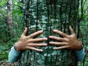 Immersion Bain de forêt