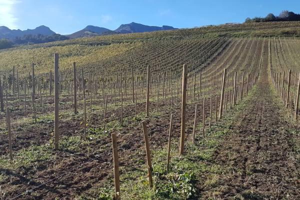 Démonstration de matériel viticole