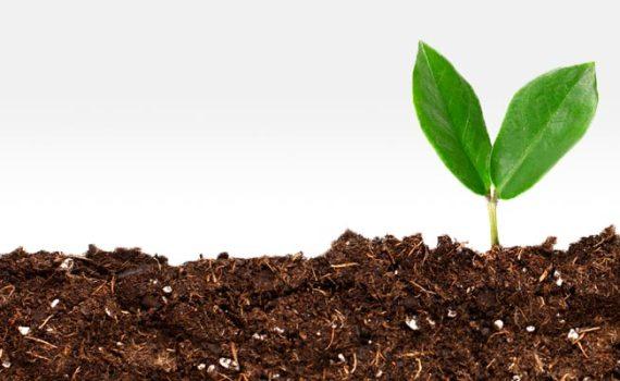 il suolo la radice della vita