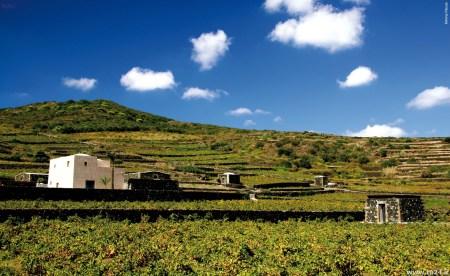 paesaggi a terrazze in sicilia