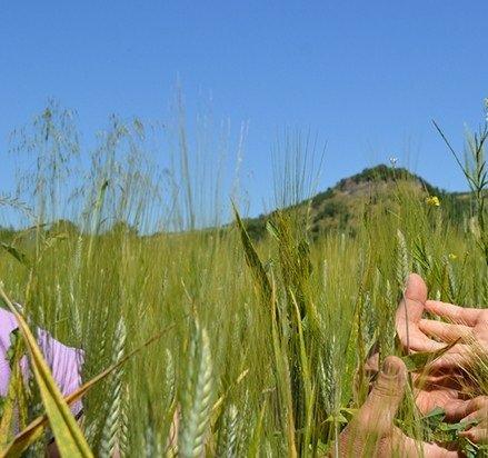 Irpinia: la terra che profuma di grano!