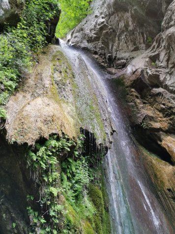 Biodiversità Monti Picentini photo Antonio Ferragamo