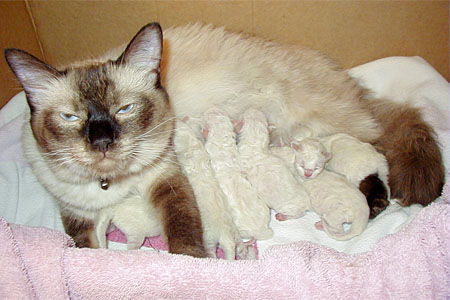 Siamese newborns