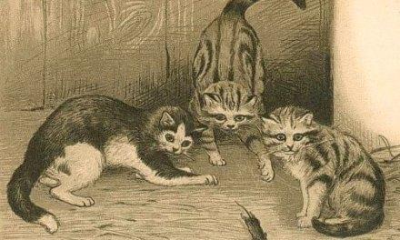 Conte Kabyle: Le Conte du Chat et des Rats