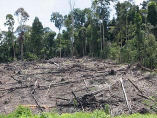 kerusakan lingkungan