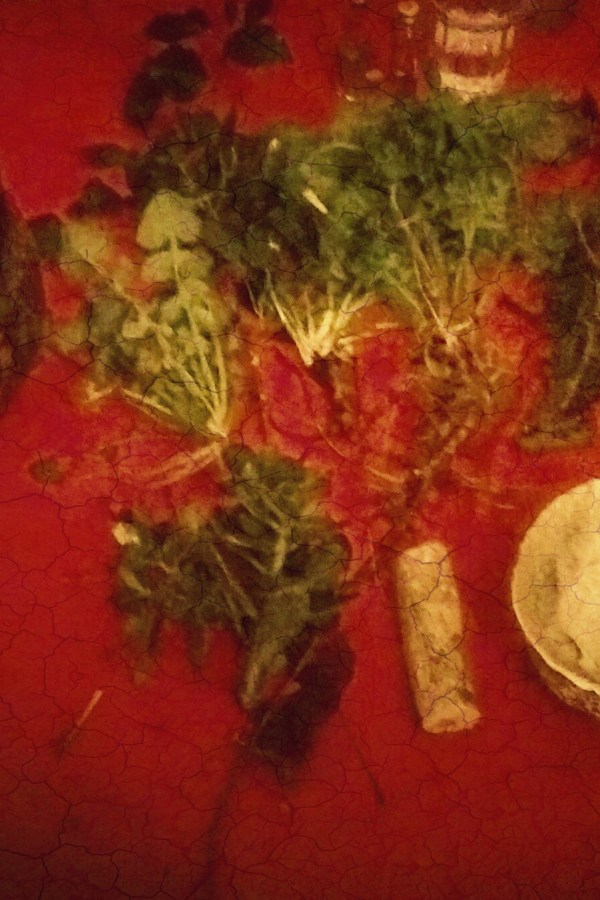 Dancing With Plants: On Cards & Ritual