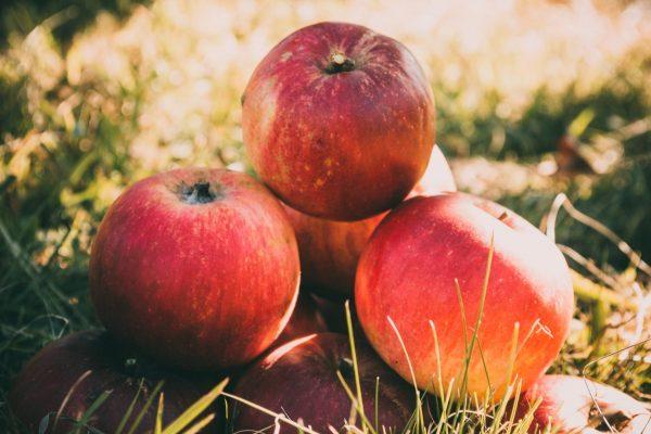 pommes pour faire une monodiète