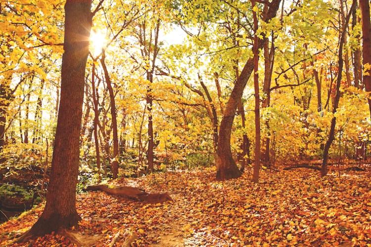 Une forêt jaune où feuilles, soleil et textures se côtoient