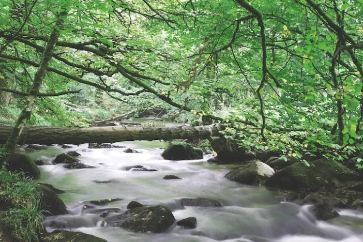 Forêt verte, eau vive et travail des castors