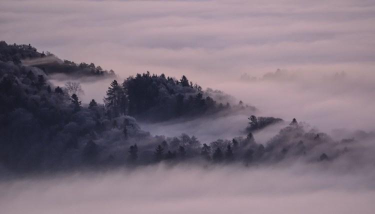 FForêt nappées de brouillard de nuages