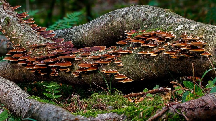 Un arbre mort fourmille de vie et régénère la forêt.