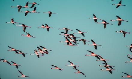 ¿Cómo le afecta el cambio climático a la fauna?
