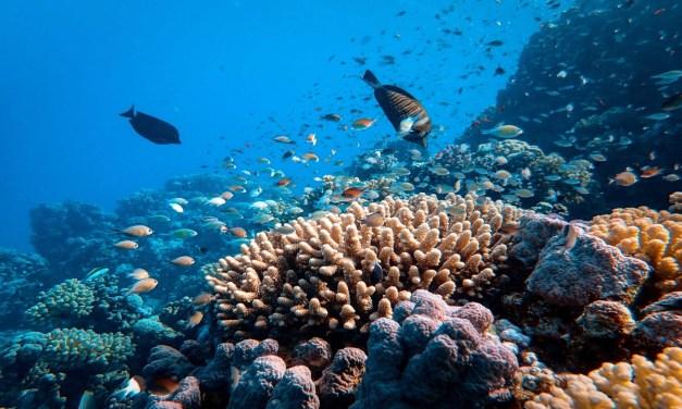 ¿Corales resistentes al cambio climático?
