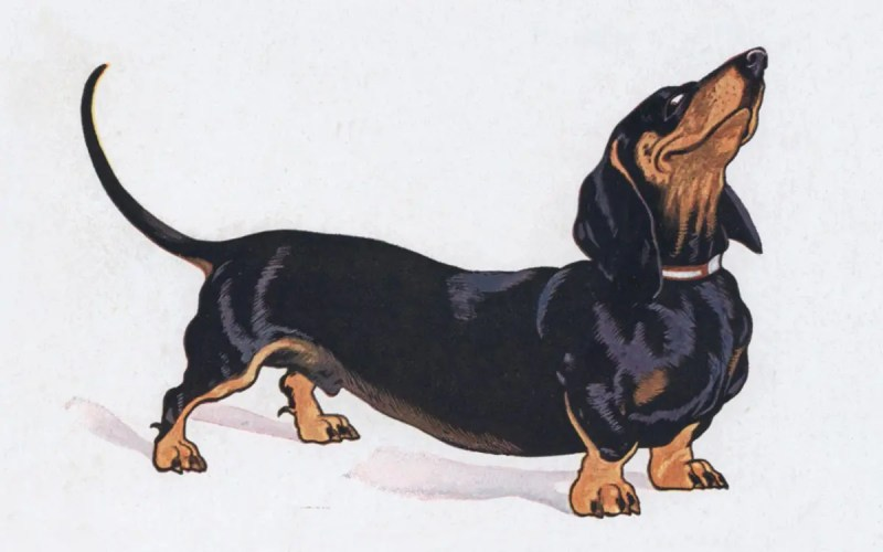 Dackel Postkarte Paul Otto Engelhard
