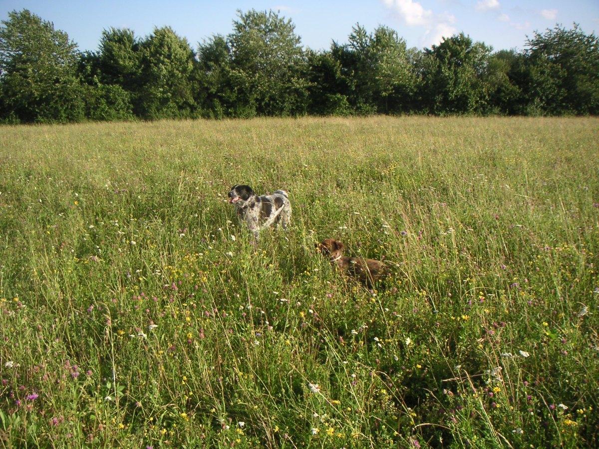Isarhunderunde 2: An der Schlossmauer