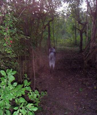 Abheben im Wald