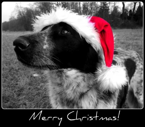 Feiert schön und lasst es euch gutgehen an den Weihnachtstagen :)!
