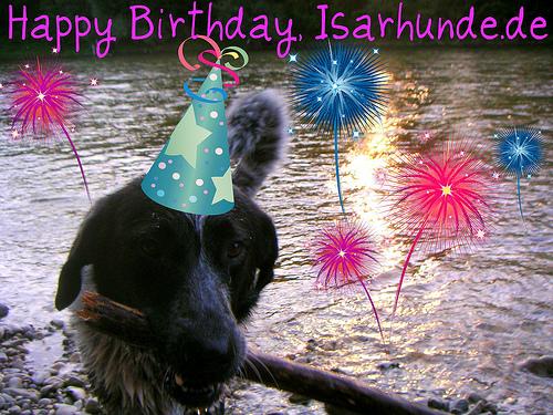 Chef-Isarhund Mika bringt schon mal ein Stöckchen mit zur Isarhunde.de-Geburtstagssause