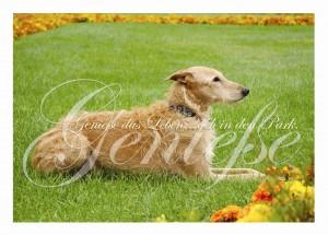 """Postkarte aus dem Set """"Windhunde"""" von ars canis"""