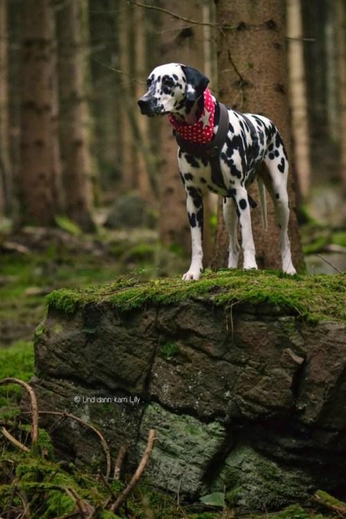 Ein Ort zum Wohlfühlen: Lilly durchstreift den Odenwald. Foto: Und dann kam Lilly ...