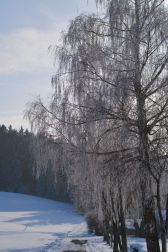 Der Weg schwingt sich links hinauf in den Winterwald