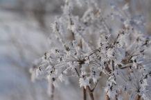 Eisblumen am Wegesrand