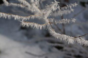Auf den Blättern und Ästen wachsen wehrhafte Eisspitzen