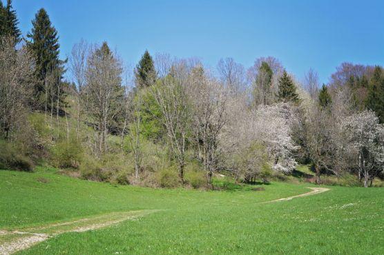 Kurz nach dem Hotel Adersberg geht es über die sonnige Almlandschaft weiter bergauf