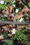 Die ersten Blumen blühen schon