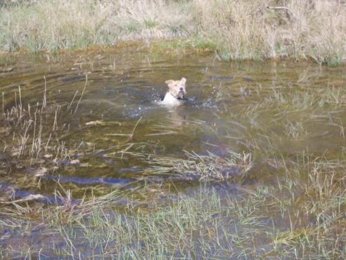 Wer seine Zweibeiner nicht an der Leine hält, geht schnell mal baden - dann doch lieber Abkühlung  im Umland suchen. Foto: Erlebnisse mit Chris
