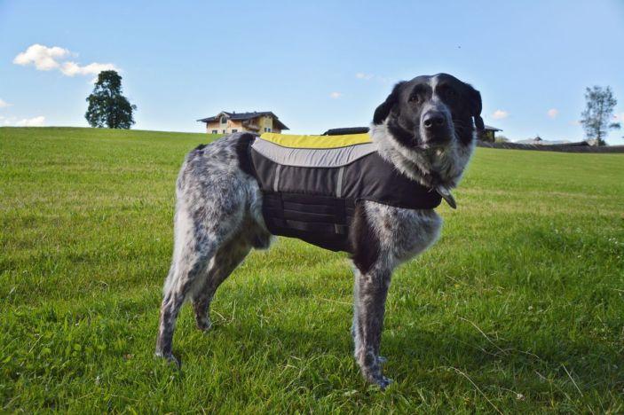 Passform: Bei Hunden mit breitem und tiefem Brustkorb kann es mit dem Neopren-Klettteil schon etwas knapp werden