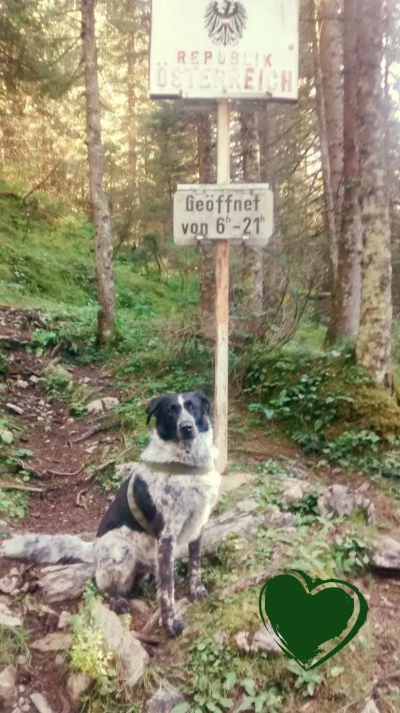 Mika am Grenzübergang zu Österreich
