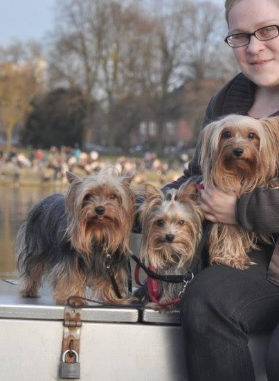 Kellie vom Yorkshire Terrier Blog mit ihren drei süßen Fellnasen. Foto: Yorkshire Terrier Blog